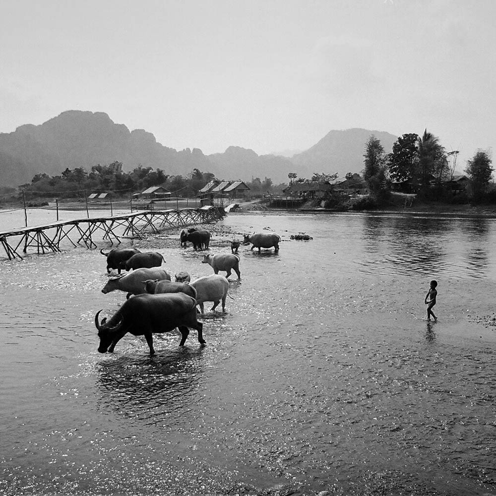 life on the water a photo essay ciapannaphoto child driving water buffalo near a bamboo bridge on the outskirts of vang vieng