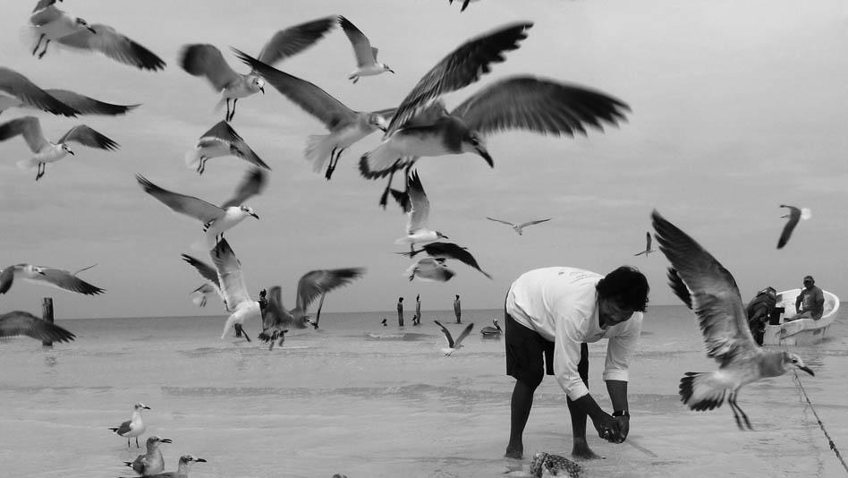P1020253_gulls_home