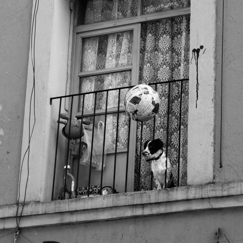 Eagerly awaiting his owner to come home, this pup shares a tiny balcony with random clutter.