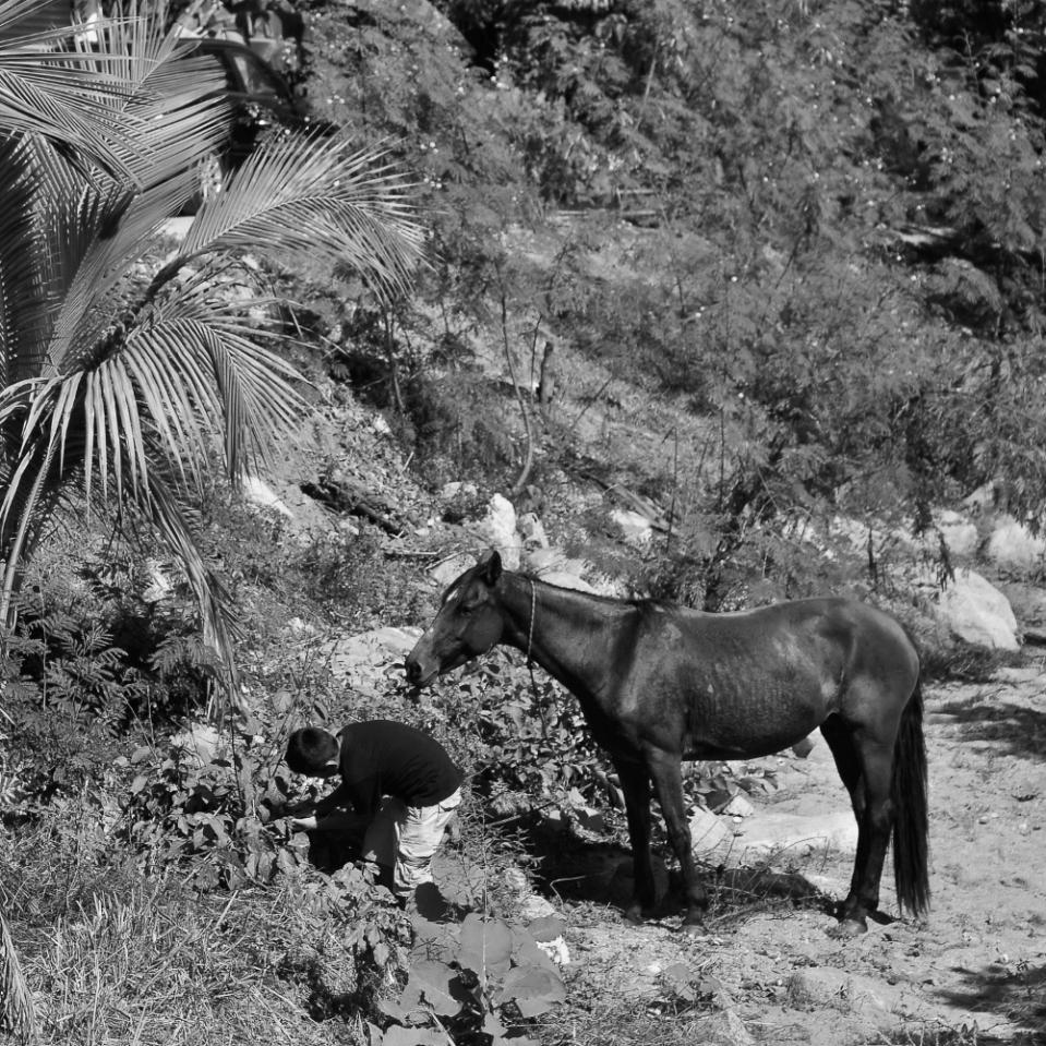In this part of Mexico, all the kids go to school, and afterwards they lend a hand to carry out the daily chores, like this one, who came running out of the forest towards his horse, tethered to a tree in a dry river bed...