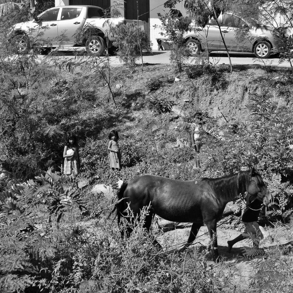 ...the horse was moved to a different location under the watchful eyes of other children, and then the kid disappeared - always running - back into the forest.