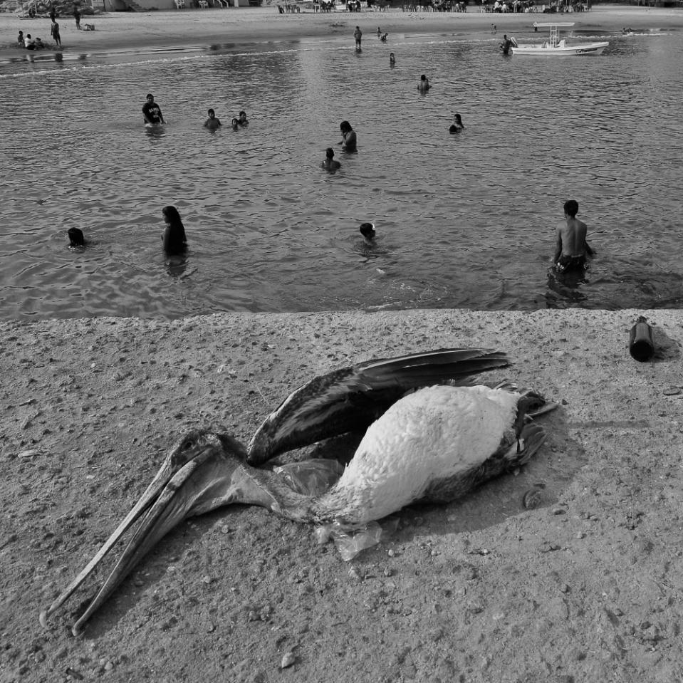 Pelican't any longer.