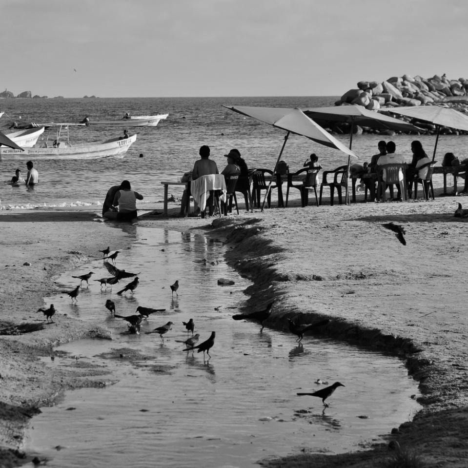 Black birds bathing.