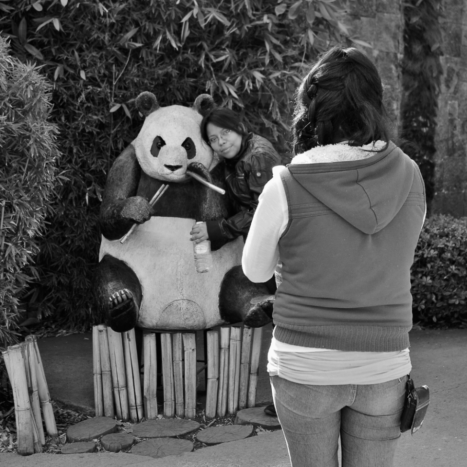 A panda in a zoo, i struggle to understand. A fake panda outside a real panda's enclosure, has me scratching my head even more. But what i really, really struggle to grasp, is why, o why does it appear to be holding chopsticks?