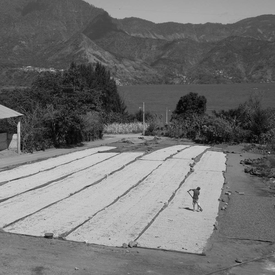 It's tough work, but the view isn't half bad: beyond the sun-drying beans, lake Atitlan.