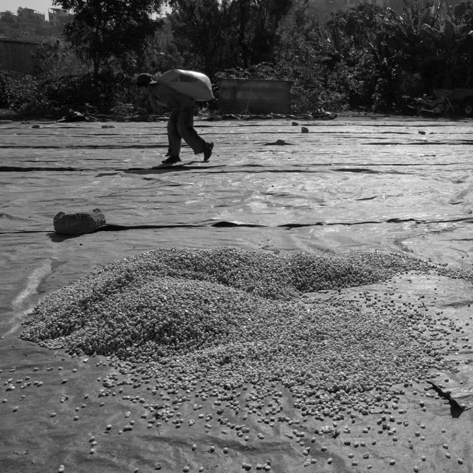 The - extremely heavy - sacks of wet beans are spread out on concrete surfaces or large plastic tarps held in place by large stones.