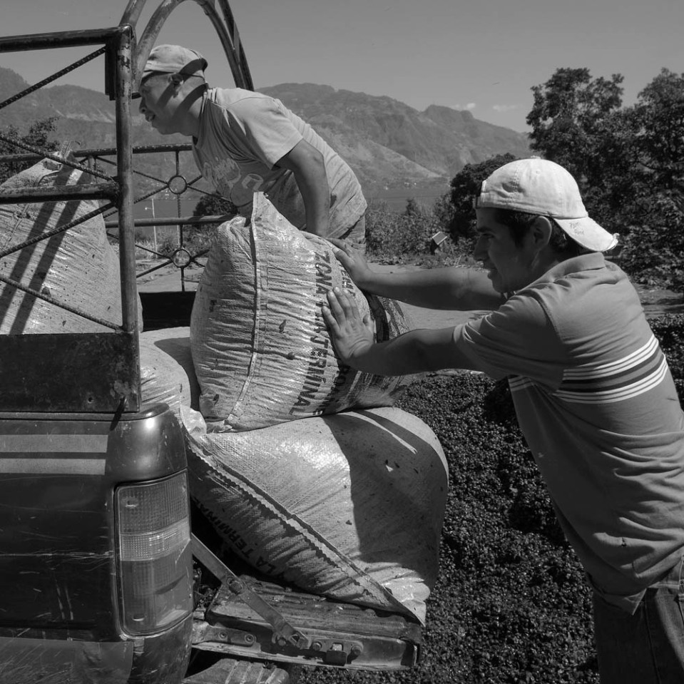 Unfortunately, this photo essay ends with the sun-dried beans being loaded intot rucks and carried off to Guatemala City, where it will be milled one more time to remove a final layer of husk and then toasted and or shipped overseas.