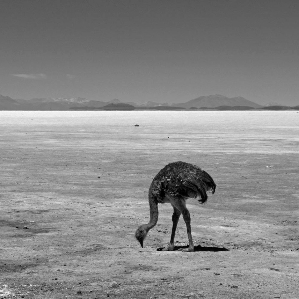 I have no idea what an emu would be doing roosting on the salt flats. But then again, neither does he.
