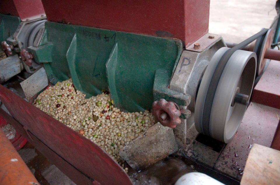 The belt-driven mechanical mill separates the red sugary husks from the whiteish beans. These will be left to ferment overnight and then washed and sun-dried.