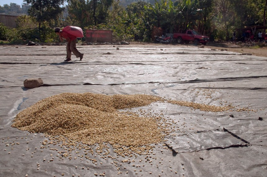 For drying, the wet coffee beans are spread out on large plastic tarps held in place by large rocks.