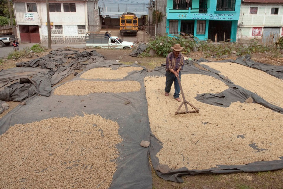 In San Pedro de la Laguna, all available space is dedicated to the drying of coffee beans, such as this empty lot.