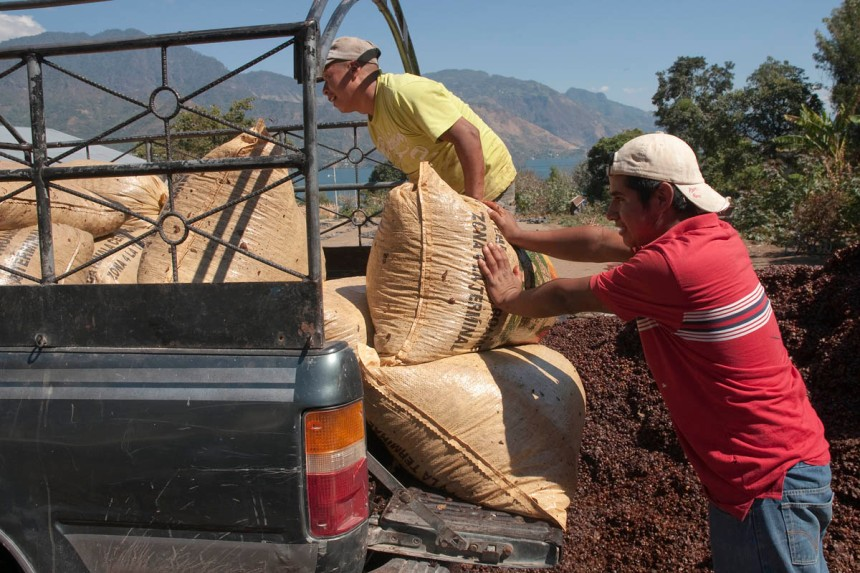 The dry coffee beans are driven to Guatemala city, where the fina de-husking will take place. Toasting, grinfing and perhaps blending will follow.