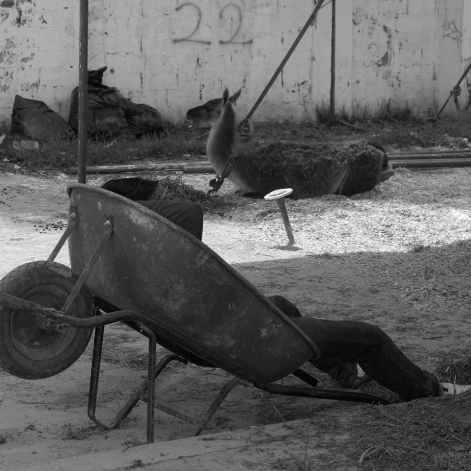 Circus office chair.