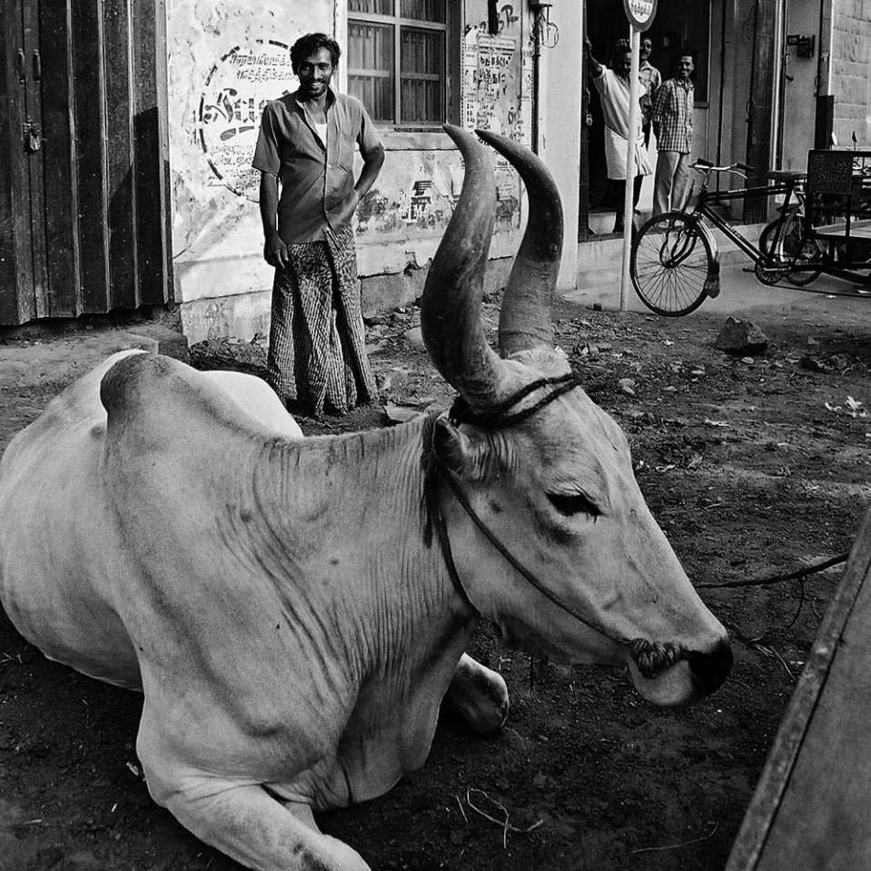 This gentleman - and his chums in the background - found my fondness of this bullock utterly amusing. Madurai.