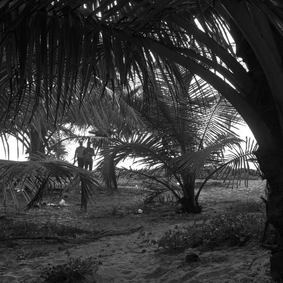 ... especially at the northern end, WHere many young palm trees provide refreshing shade.