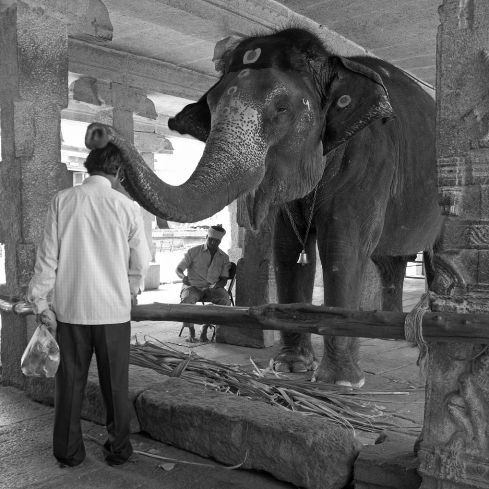 That's it for Hampi, for now. But, before we hit the road again, we need the blessing of the local elephant, Laxmi. One rupee travel insurance...?