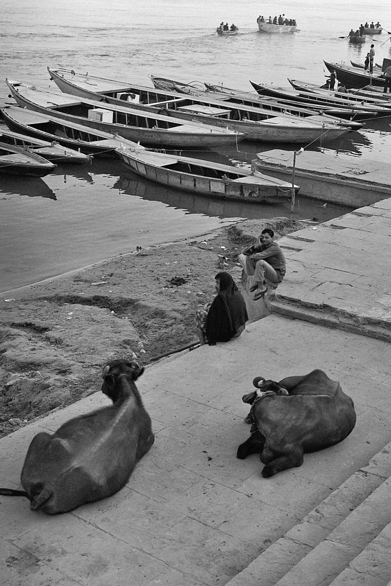 Along the Ganges River: where it's ok for cows, people and boats to just sort of chill out all together.