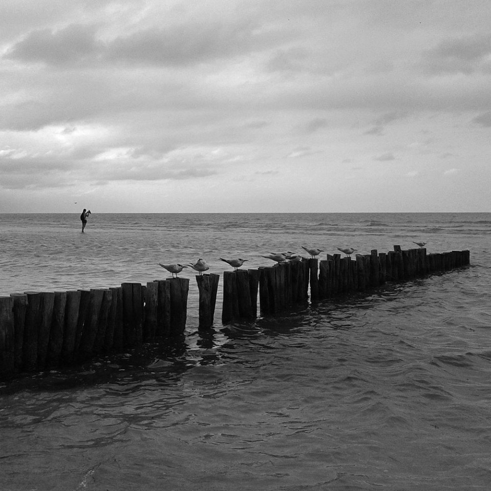 Birds, poles, sea and a man apparently standing on water