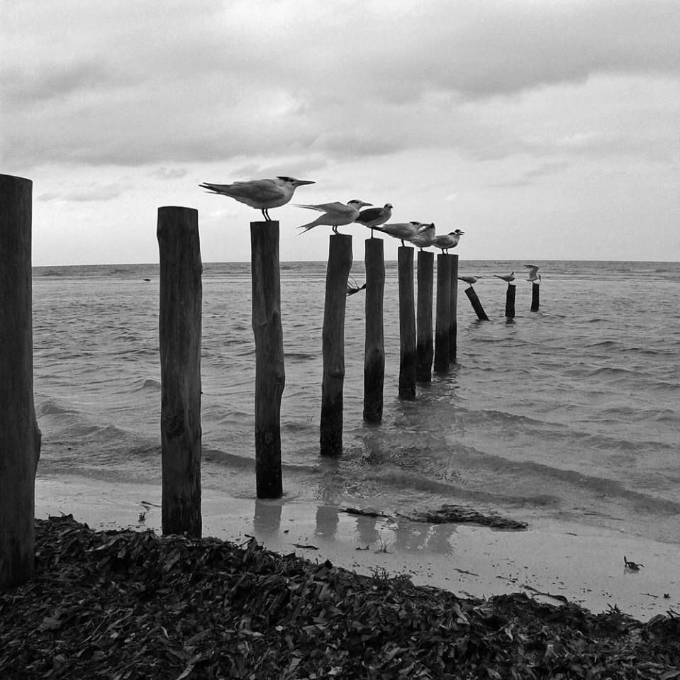 Birds, poles, sea.