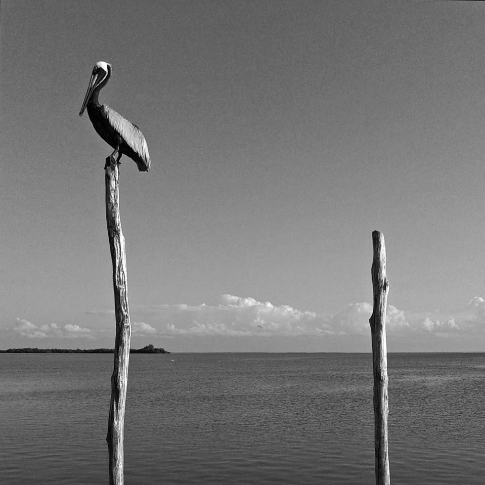 Pelican, poles, sea.