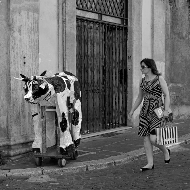 Wow, a cow! Now: how?